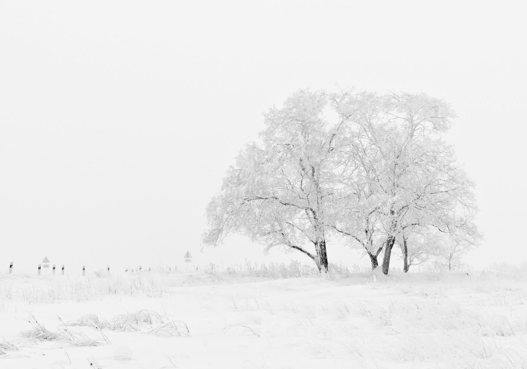 Winter Nature Season Trees 66284